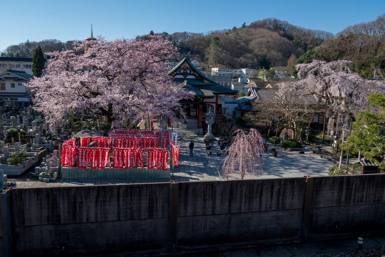 190324倉岳山_005
