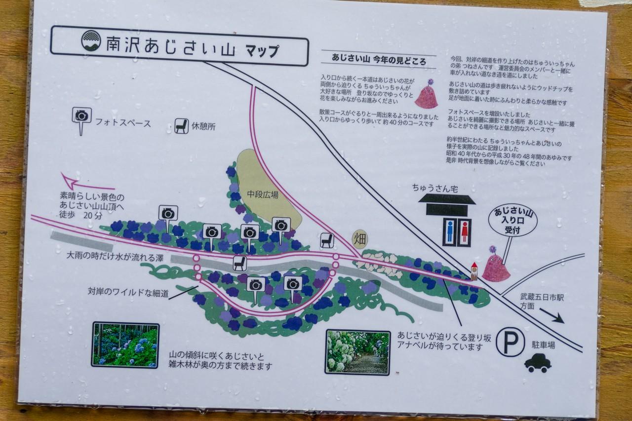 190630南沢あじさい山_031