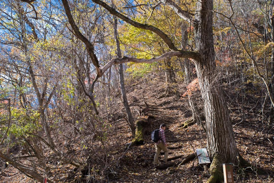 鞘口峠から三頭山への登り