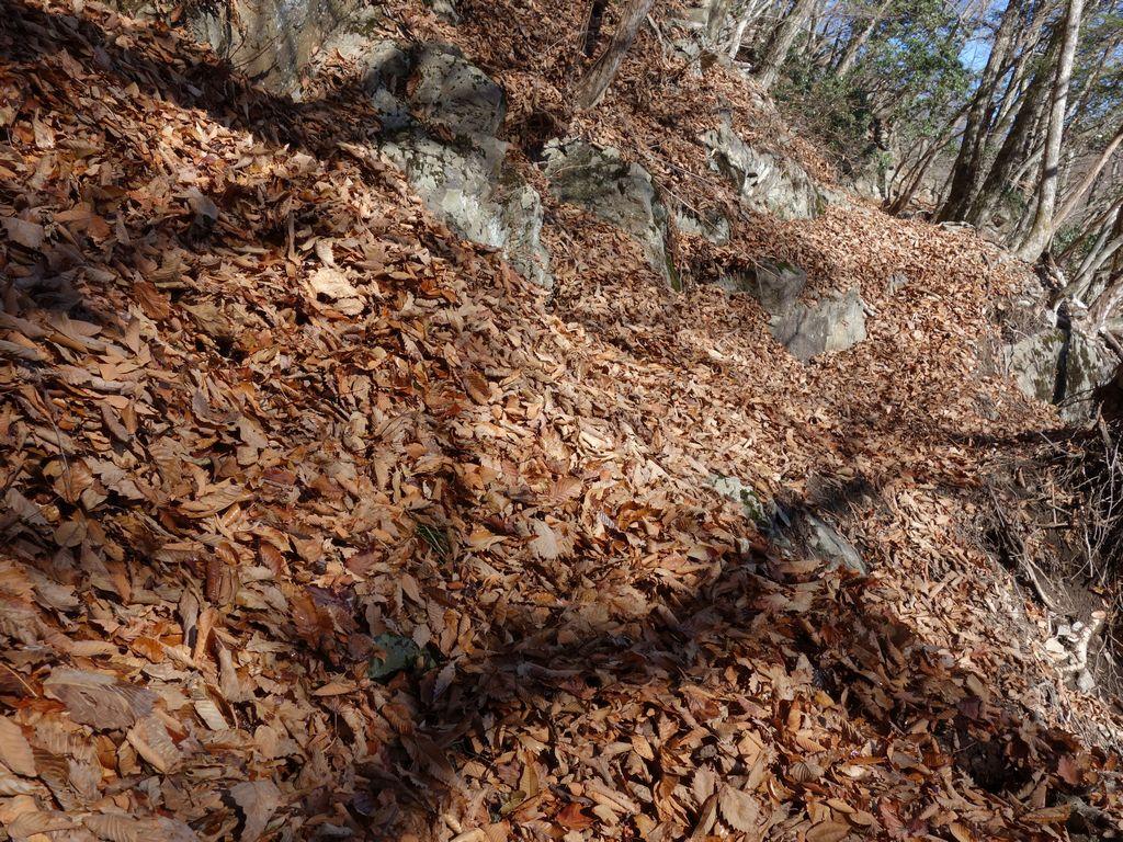 落ち葉に埋もれた登山道