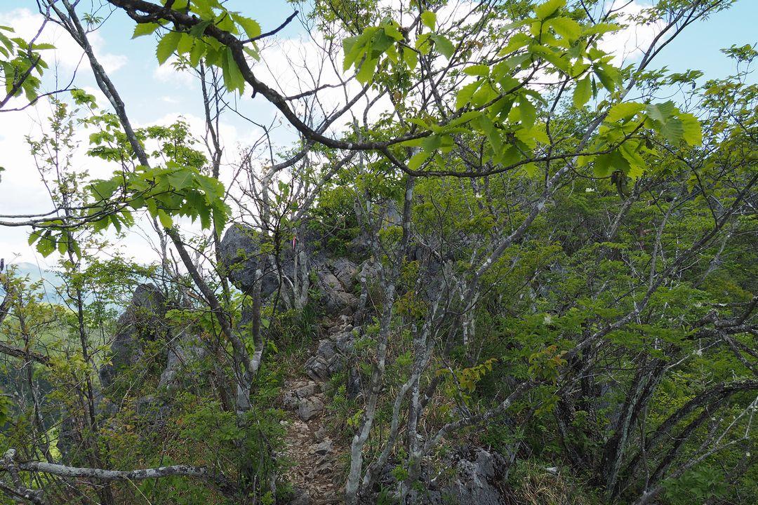 二子山 東岳の岩尾根