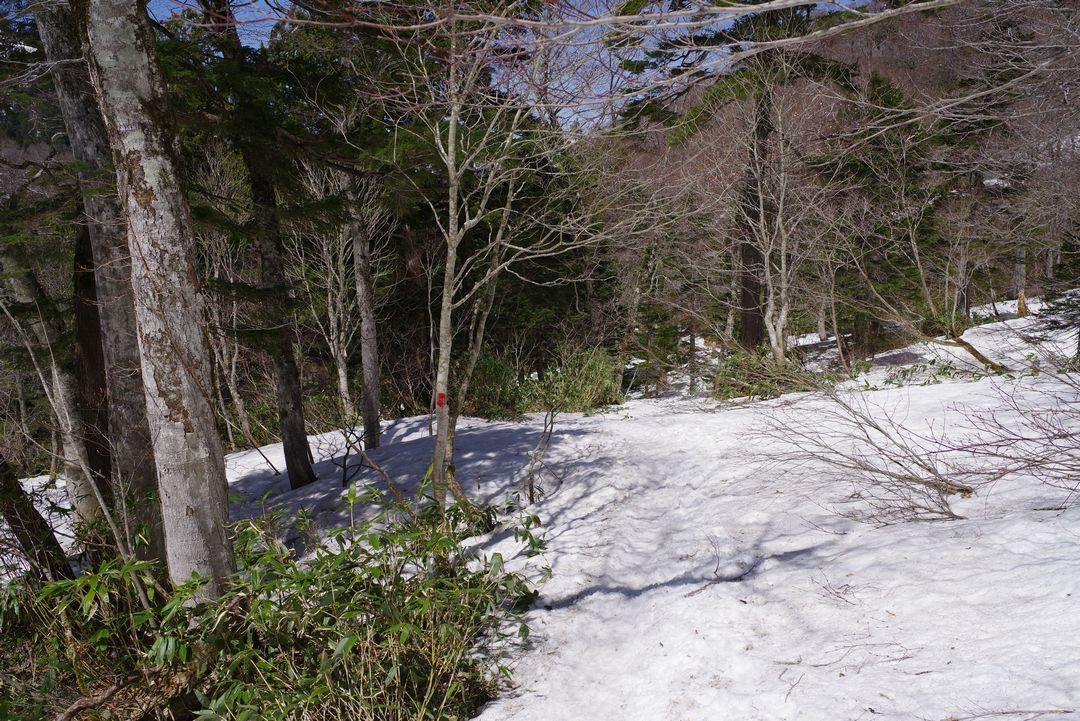 山の鼻へ向かう登山道