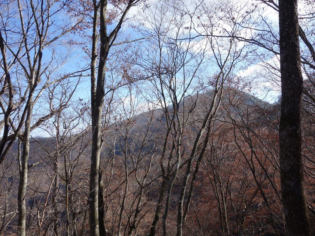 三頭山 鶴峠からの登山道の様子