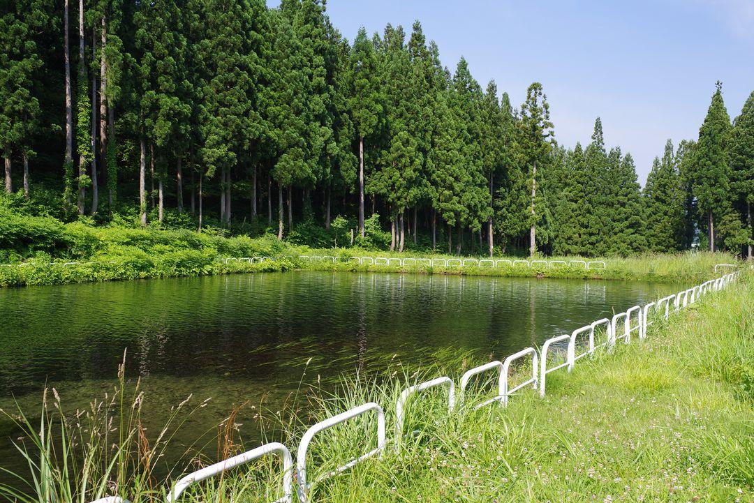 大源太山登山口にあるため池