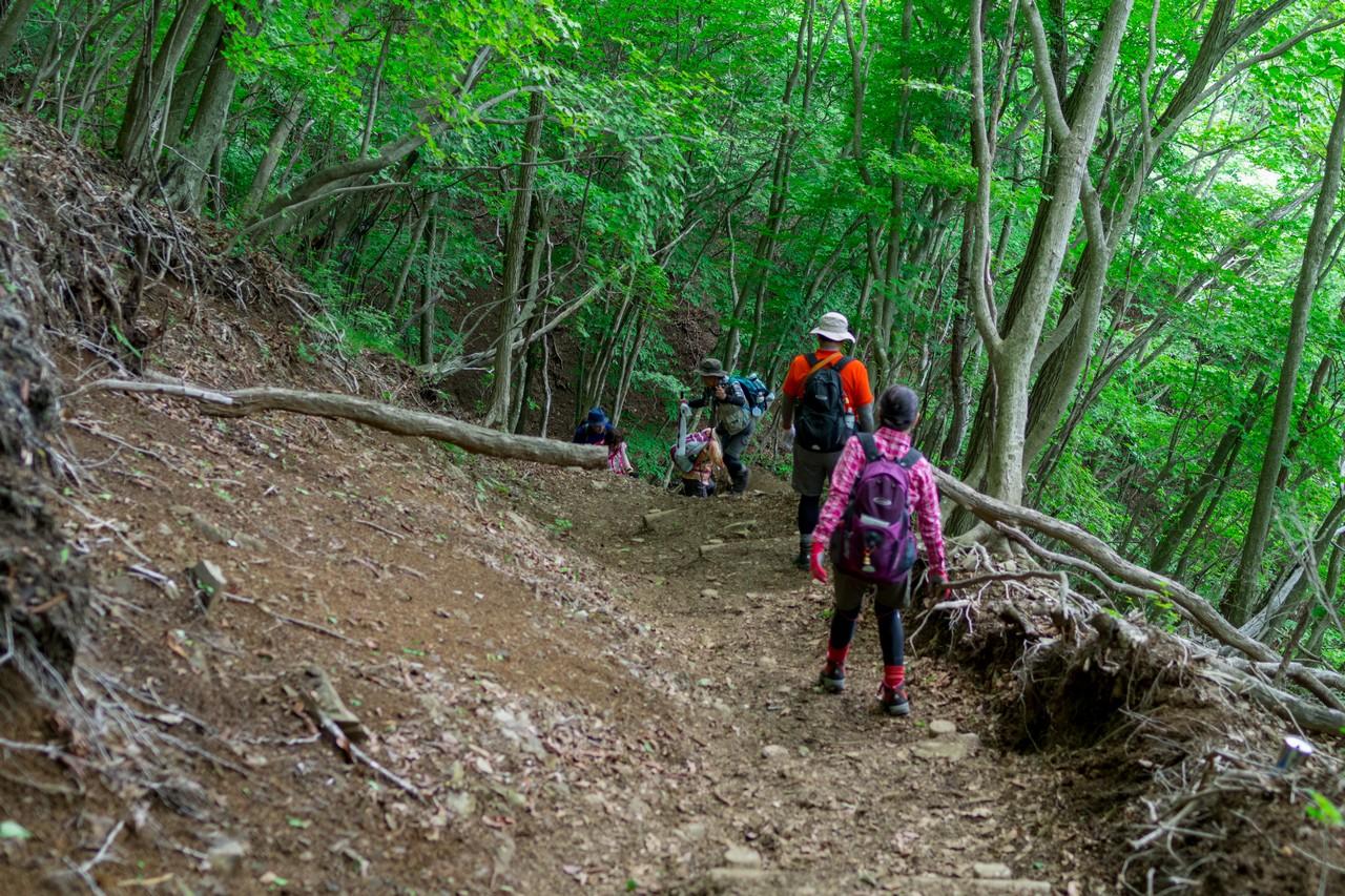 川苔山 鳩ノ巣ルートの登山道
