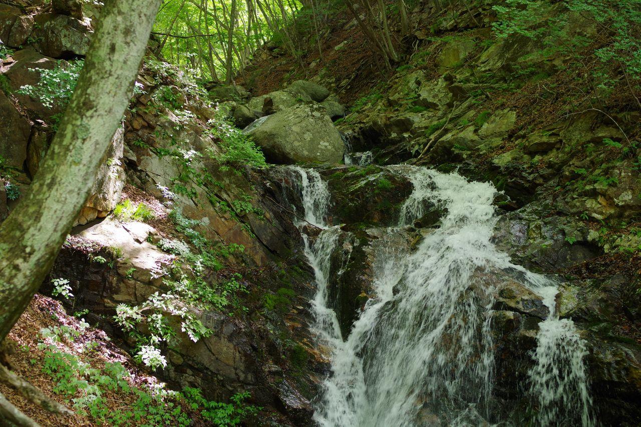 170603滝子山_025