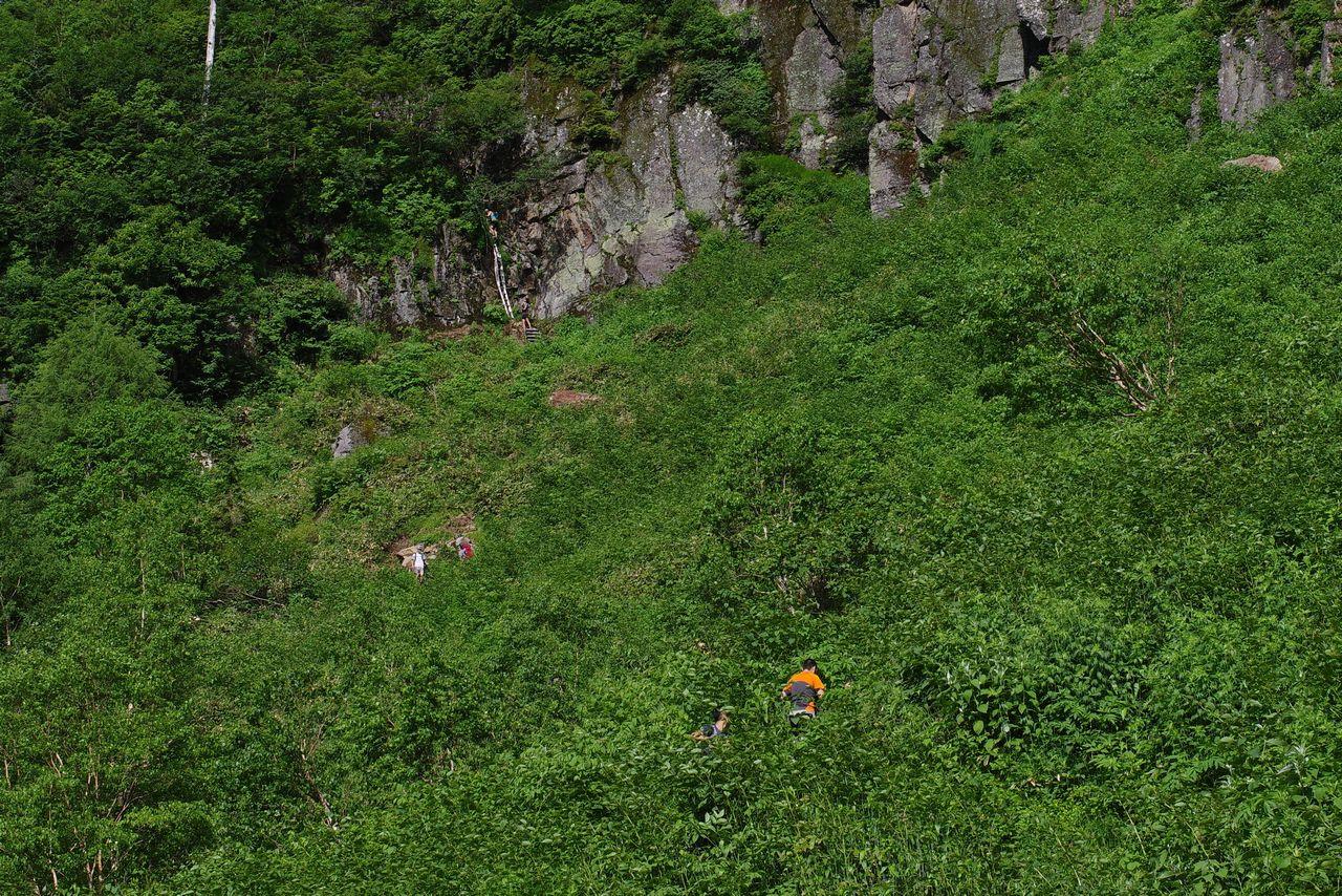 焼岳 上高地コースの登山道風景