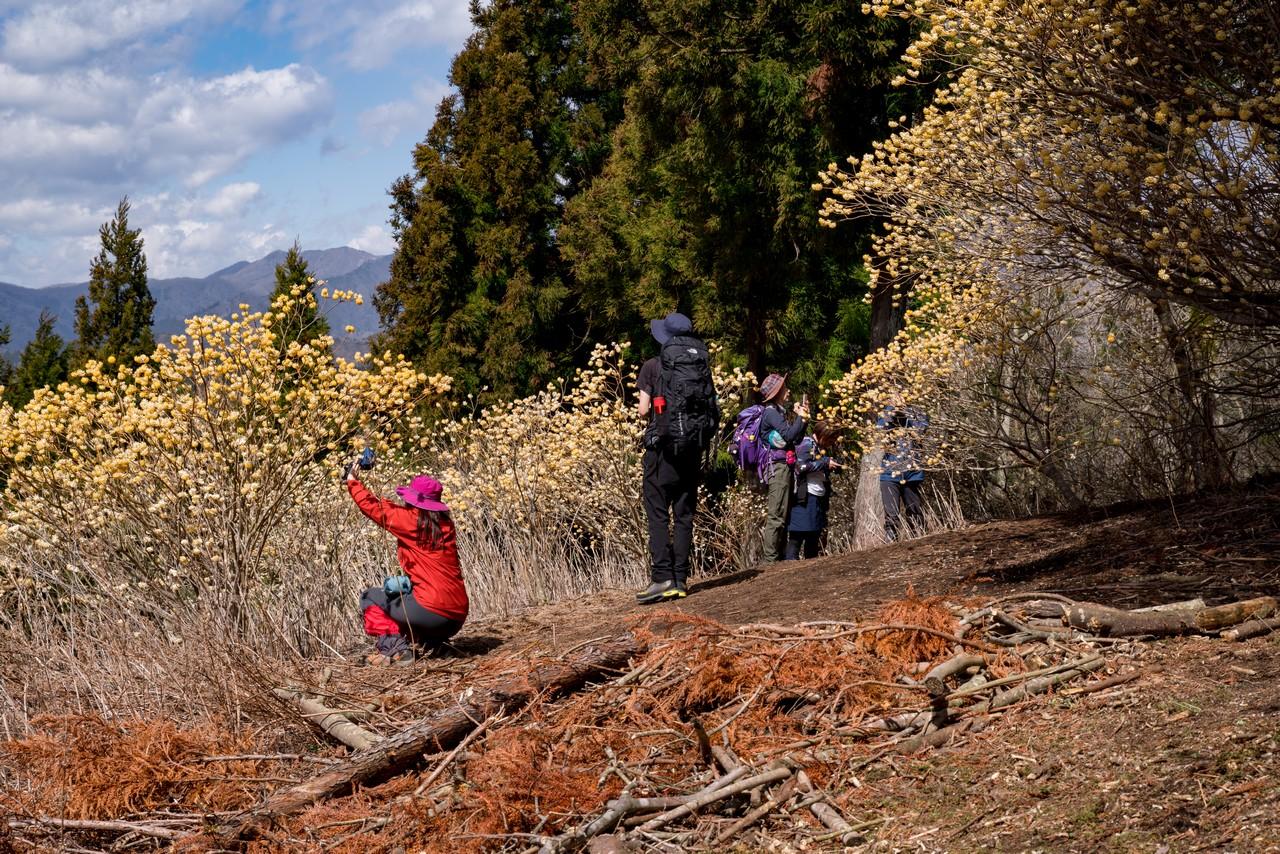 多くの登山者で賑わうミツマタシーズンのミツバ岳