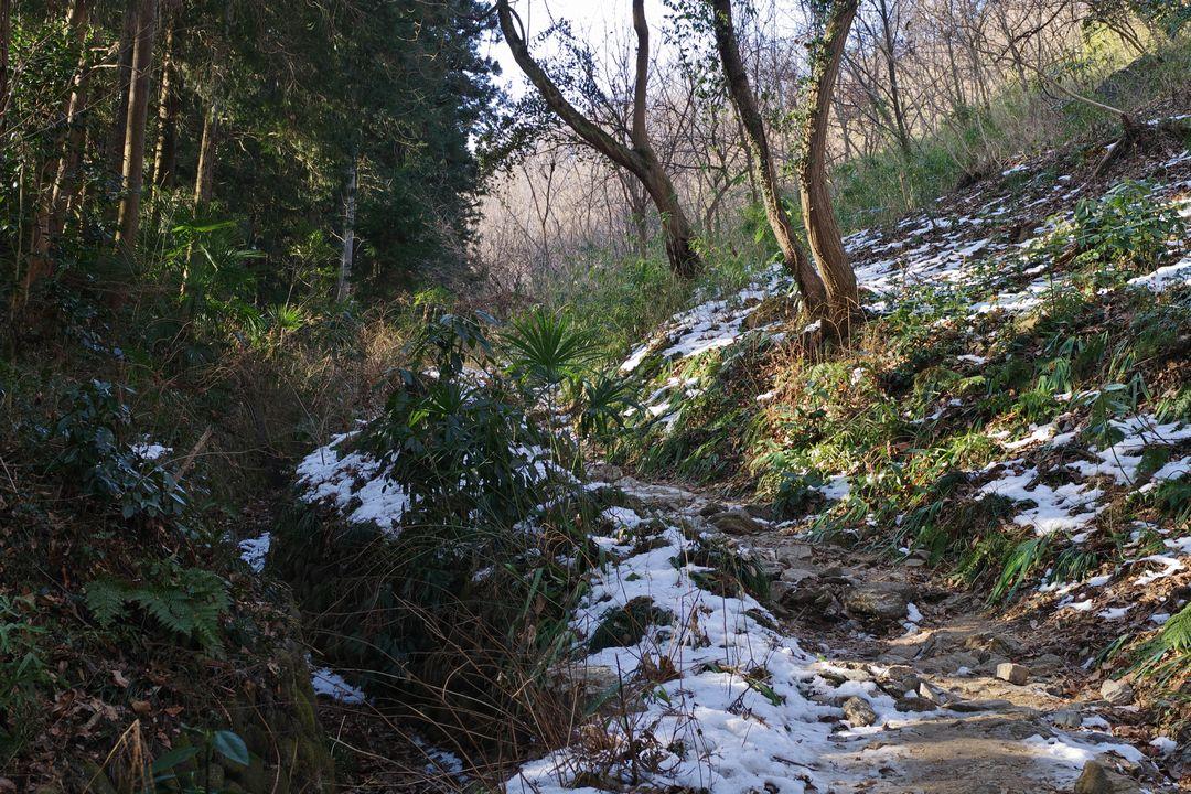 長瀞アルプスの登山道