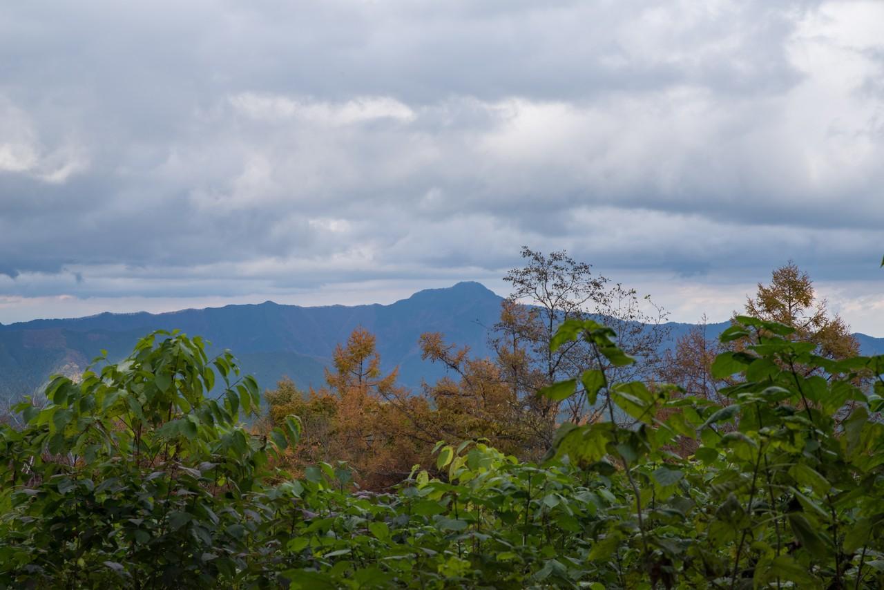 笹尾根から見た大岳山