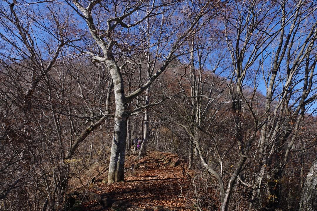 冬枯れの三頭山