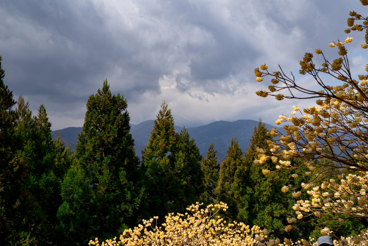 190331ミツバ岳_031