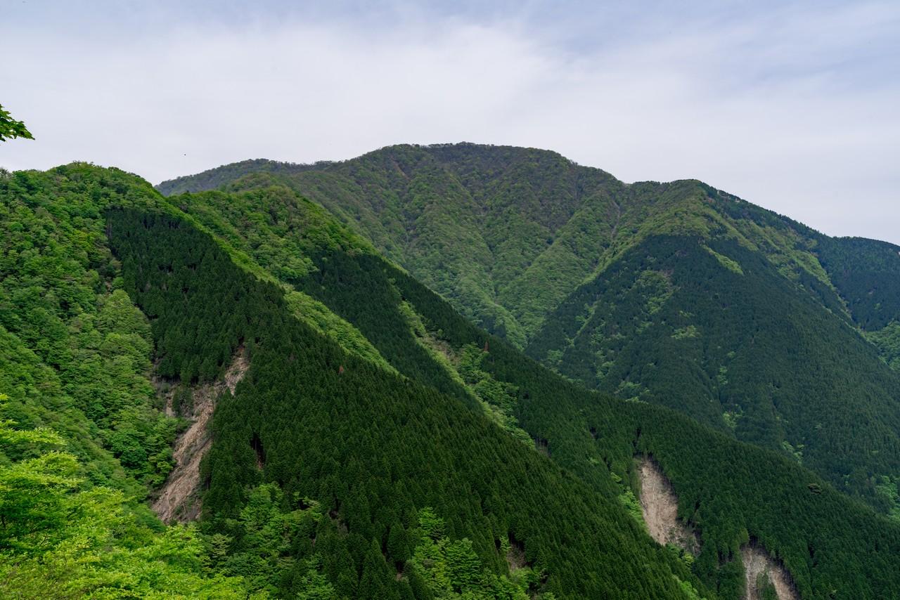 犬越路付近から見た大室山