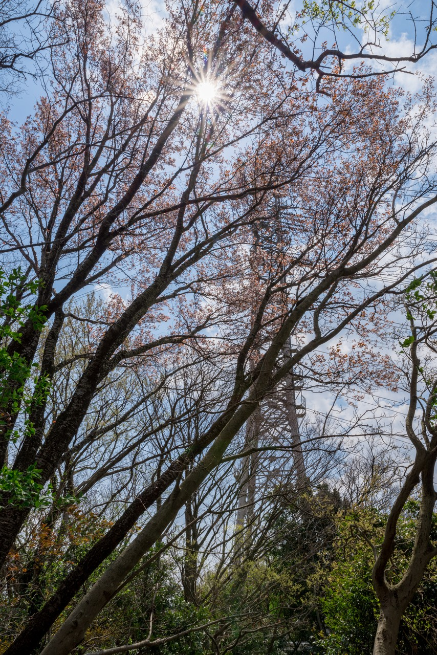 200405高取山_075