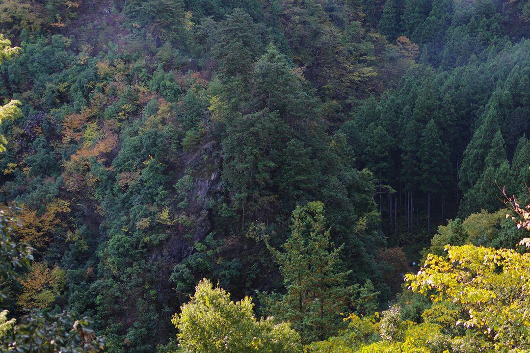 171105御岳山_022