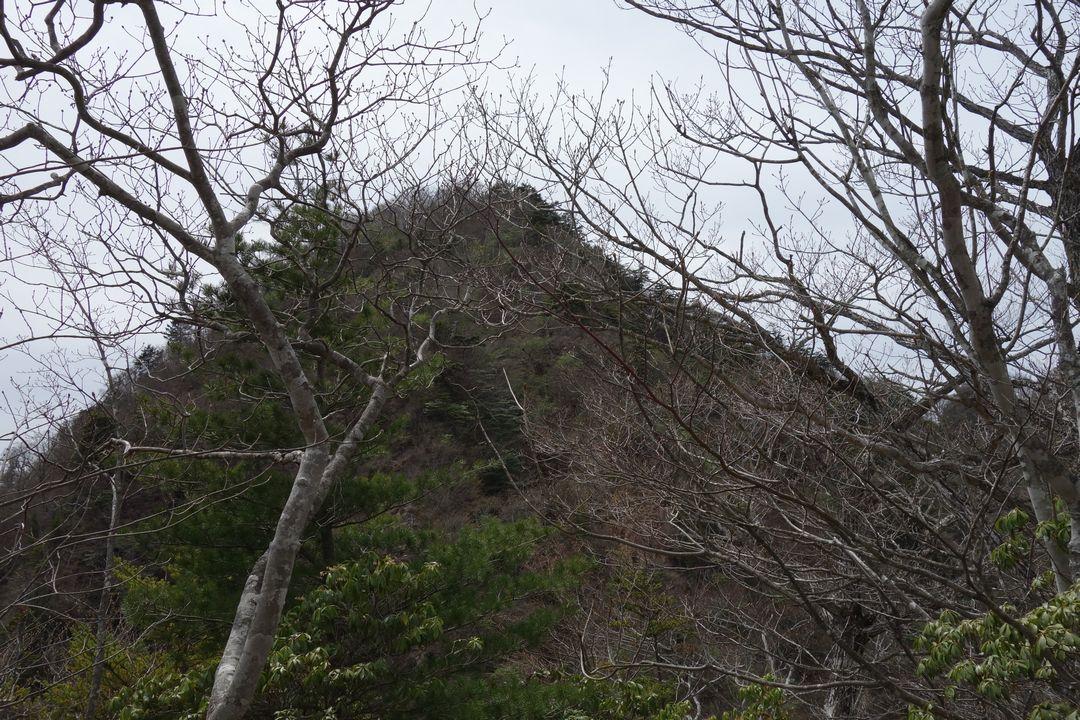 160503十二ヶ岳_036