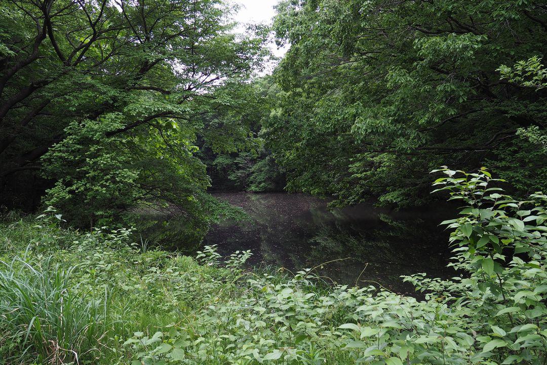 長池公園の長池
