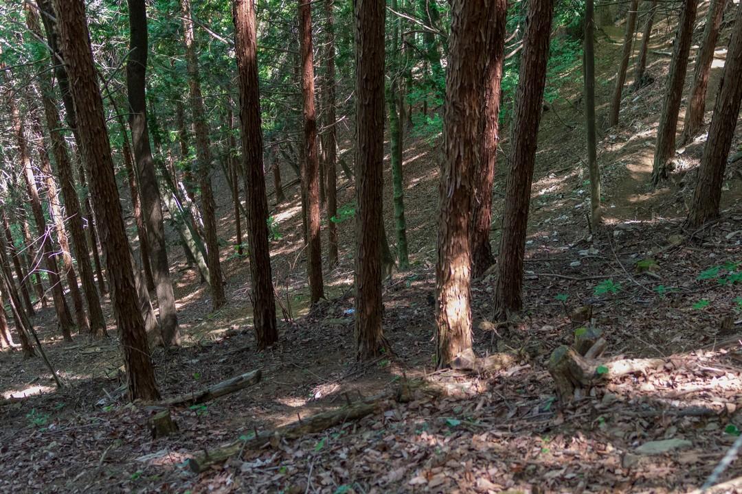 170603滝子山_067