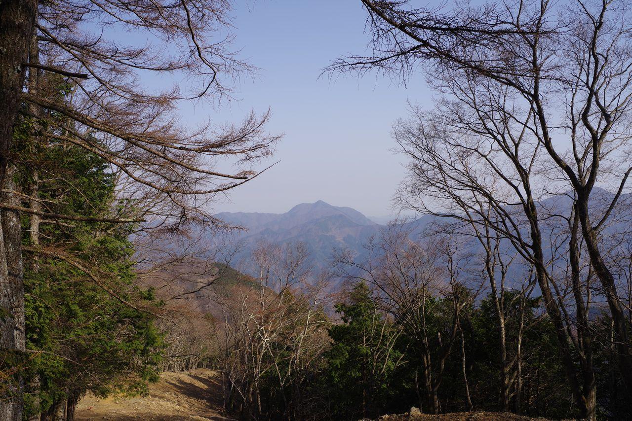 石尾根縦走路から見た大岳山