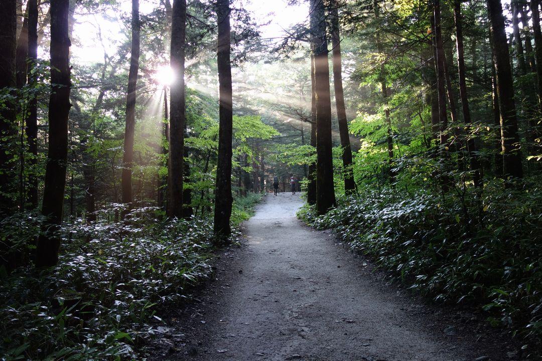上高地から明神館へ向かう道