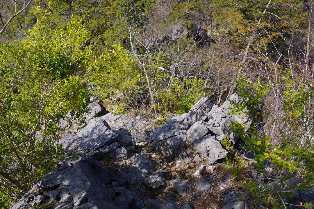 稲村岩からの下り