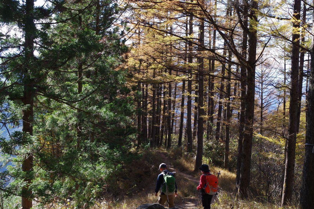 武甲山の紅葉