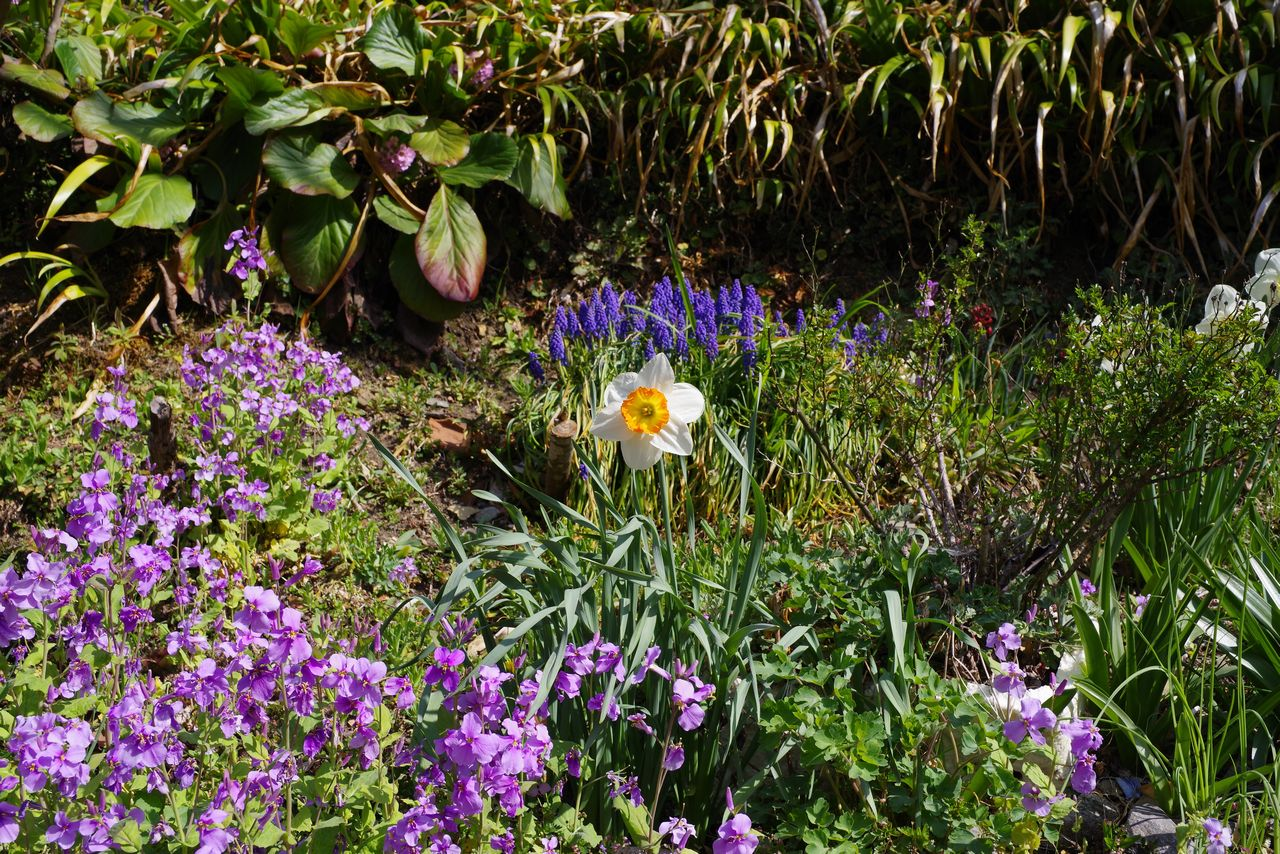 春の日原集落