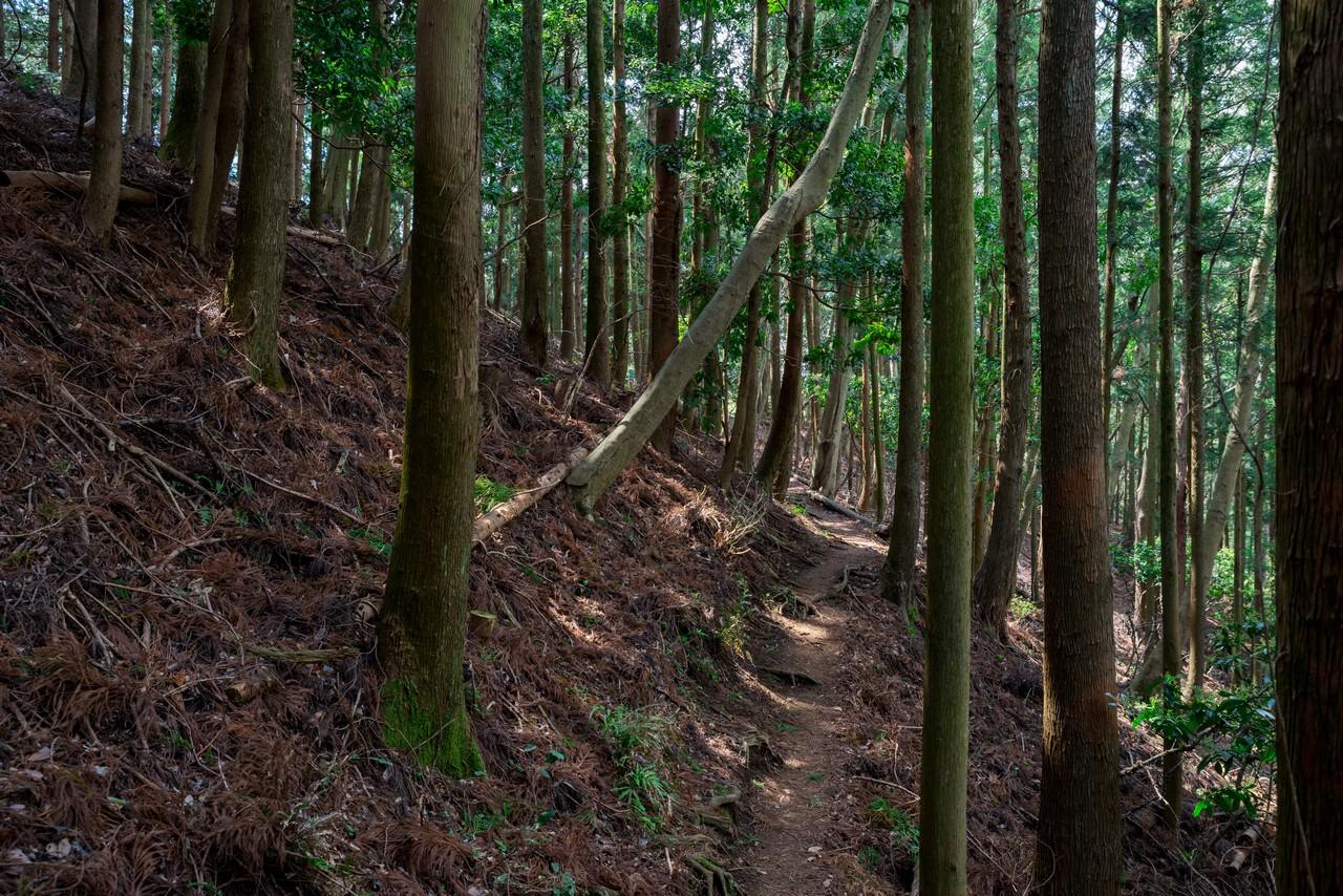 200405高取山_064