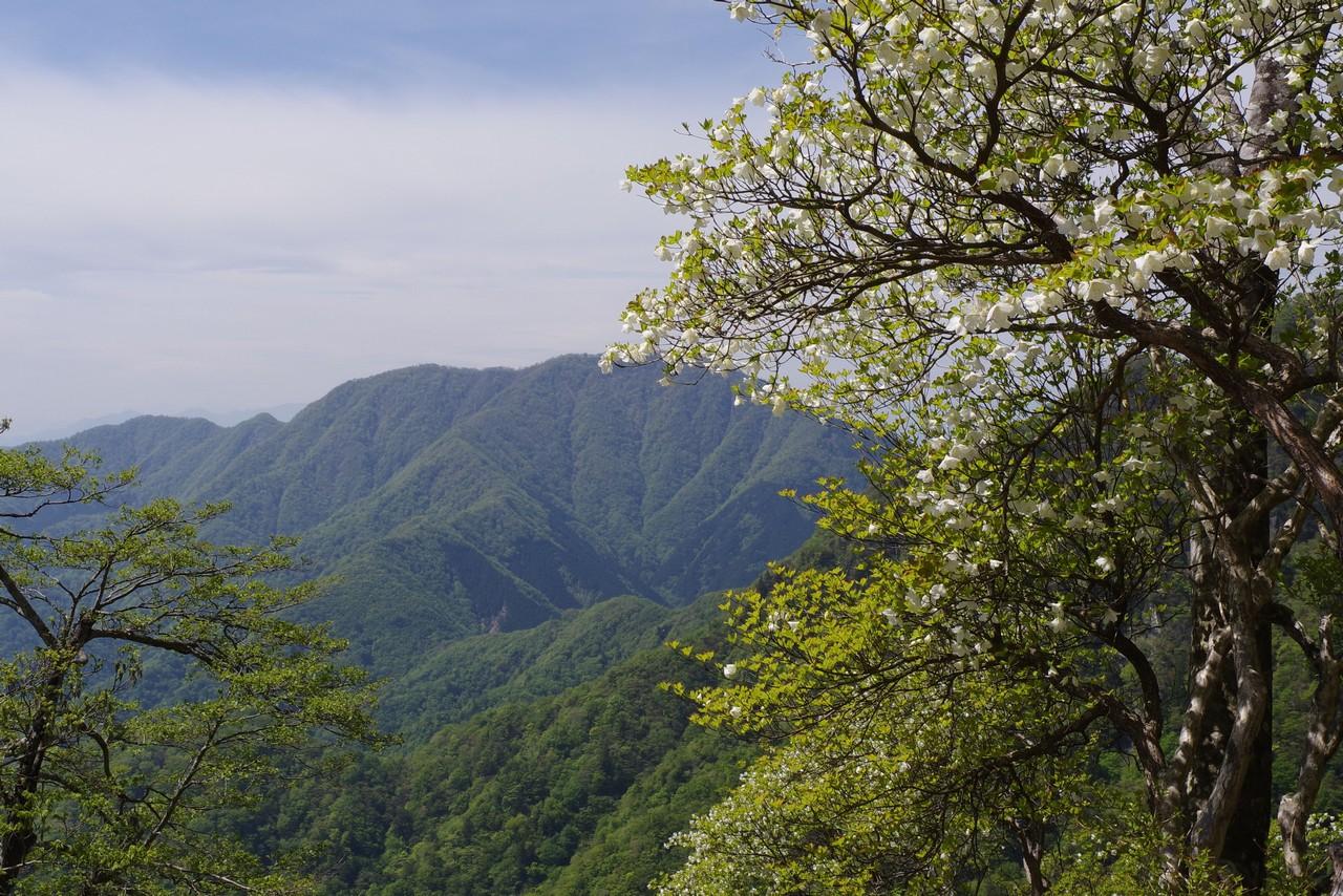 檜洞丸から見た大室山とシロヤシオ