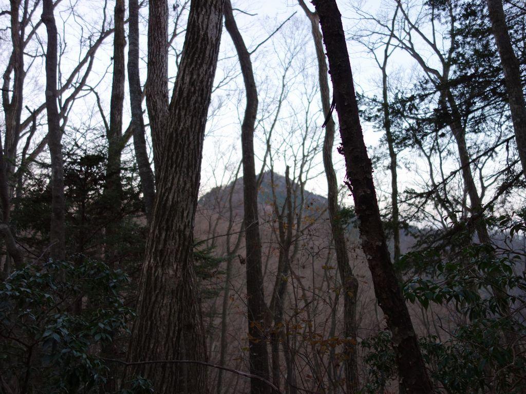 大ダワから大岳山へ向かう登山道