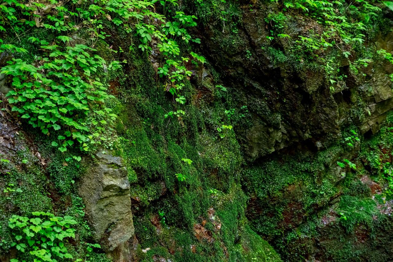 岩から染み出す水