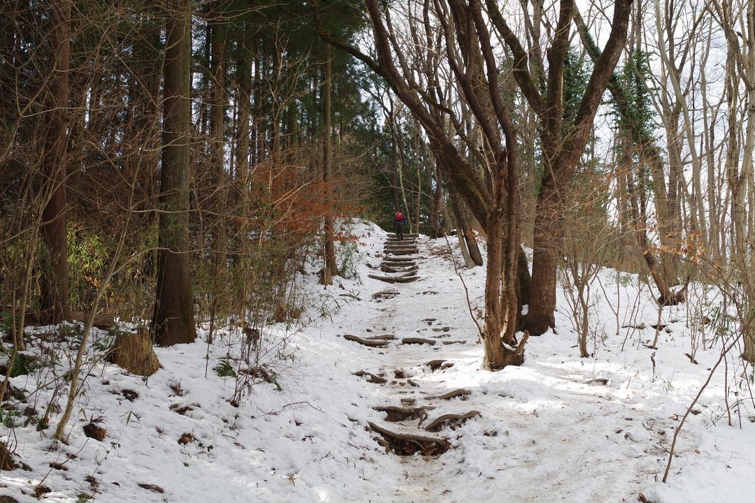 宝登山 山頂直下の階段