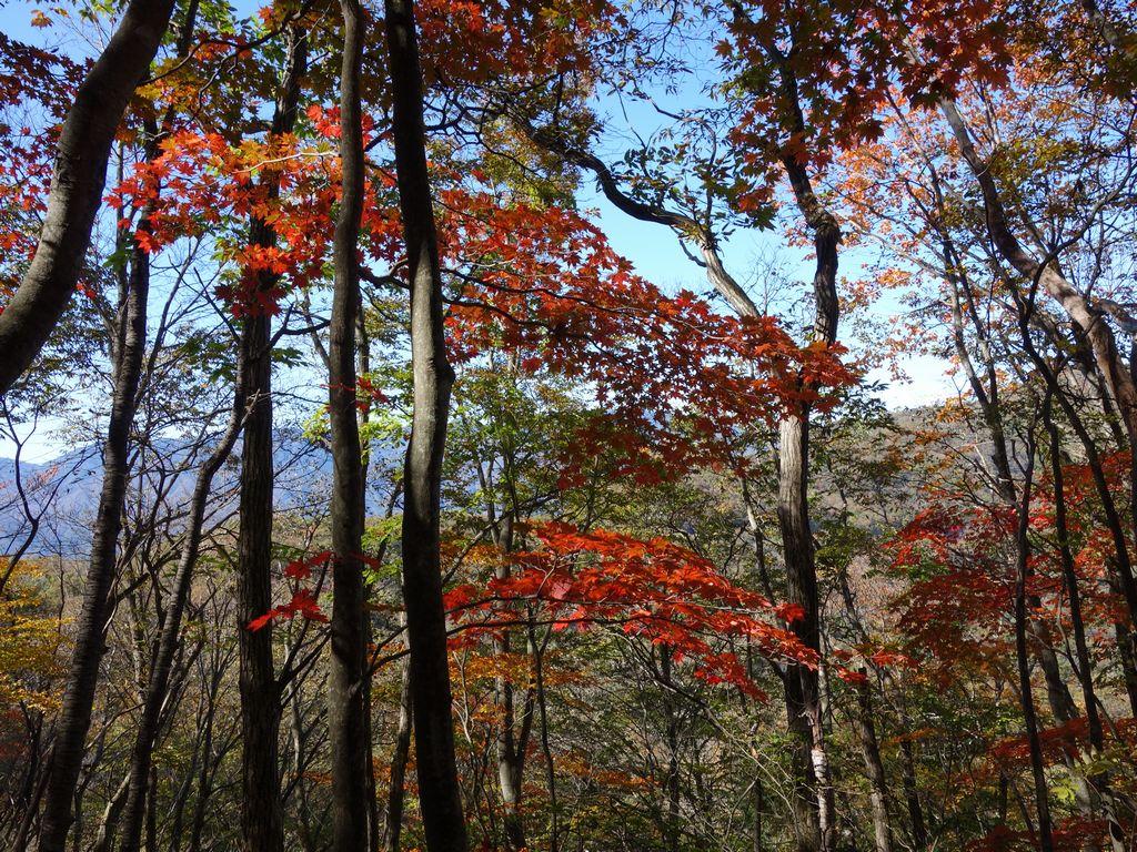 奈良倉山の紅葉