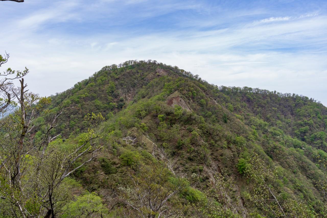犬越路コースから見た檜洞丸山頂部