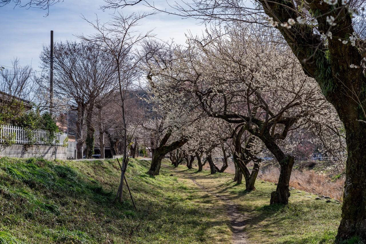 190310高尾梅郷_015
