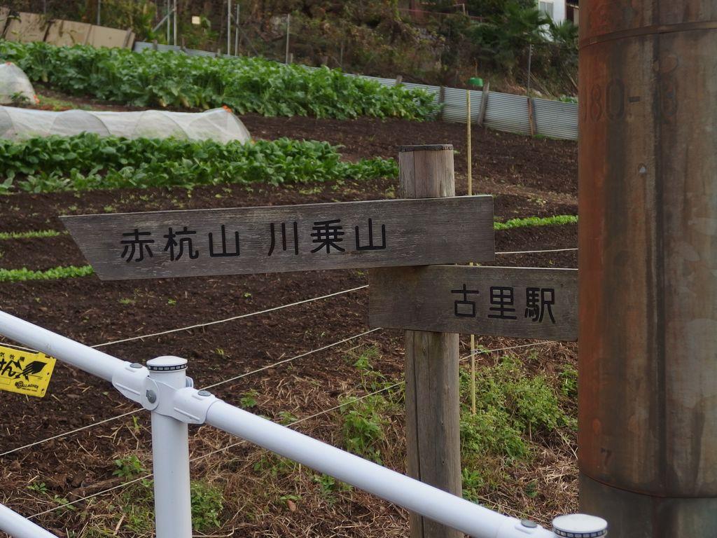 151117川苔山_007