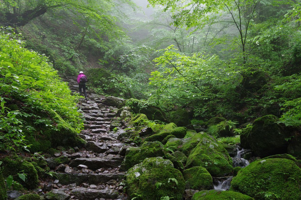御岳山 ロックガーデン