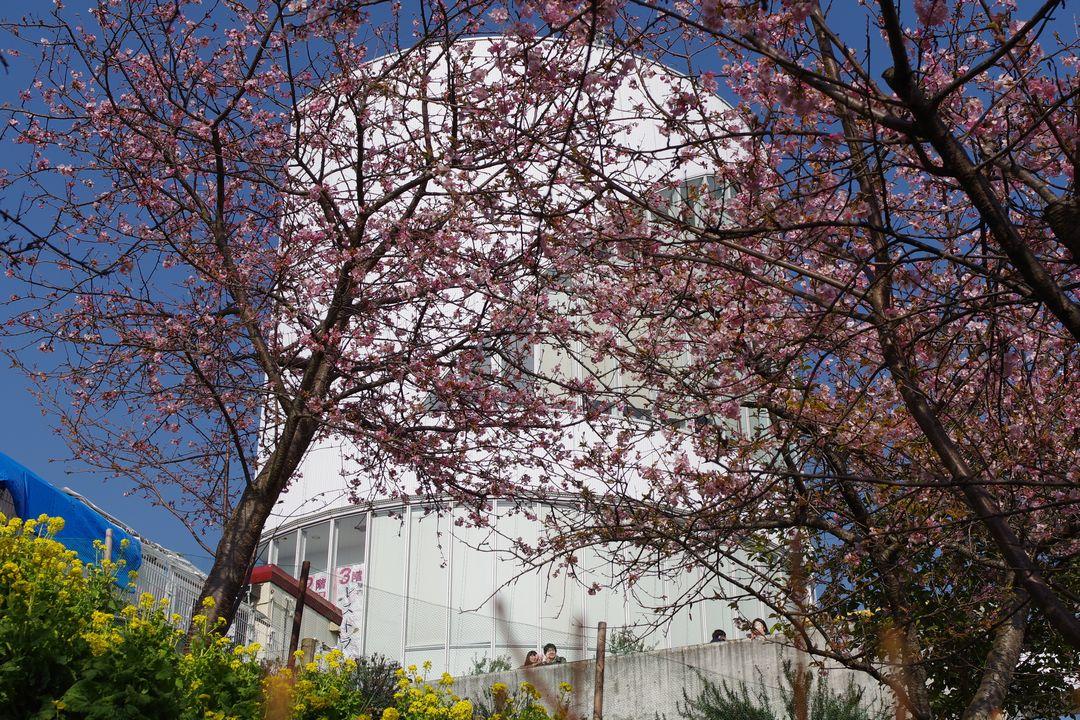 松田山ハーブ園のレストハウス
