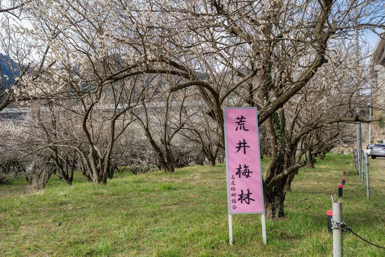 190310高尾梅郷_029