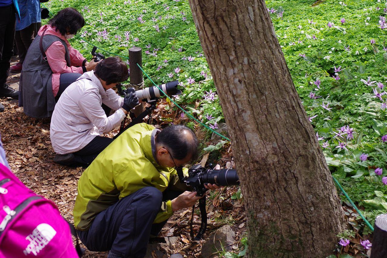 三毳山でカタクリを撮影する人々