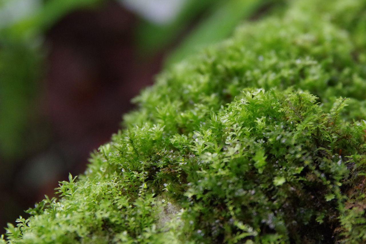 大岳山 鍾乳洞と滝の道の苔