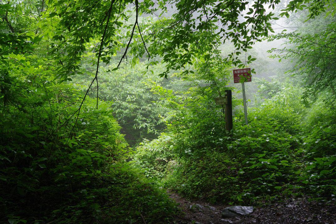 大岳山 鍾乳洞と滝の道の登山口