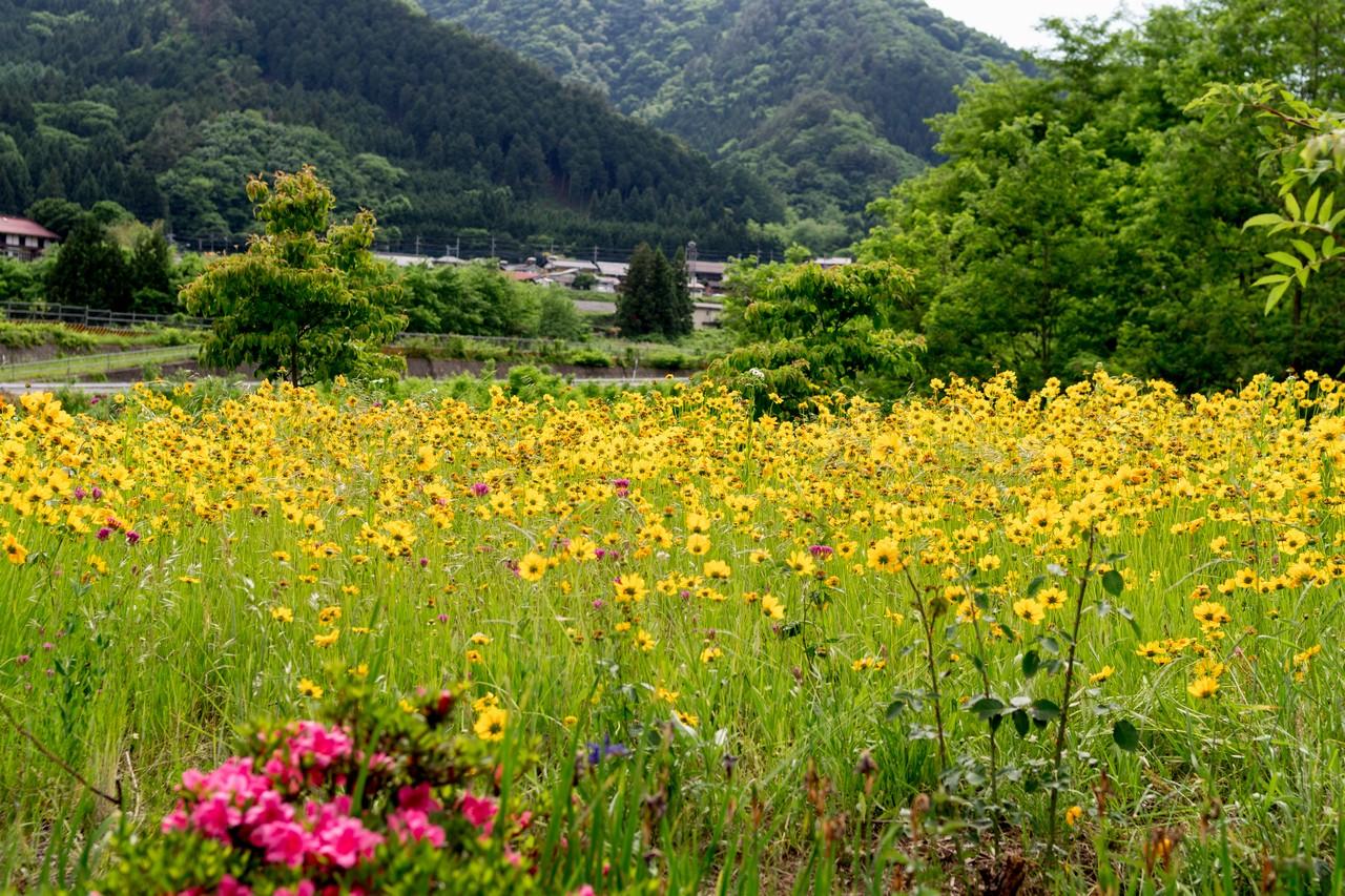 170603滝子山_076