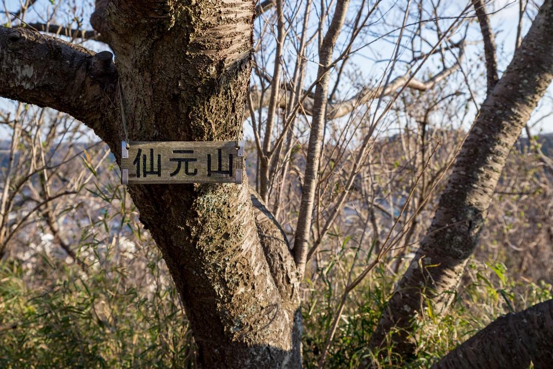 三浦アルプス 仙元山の山頂