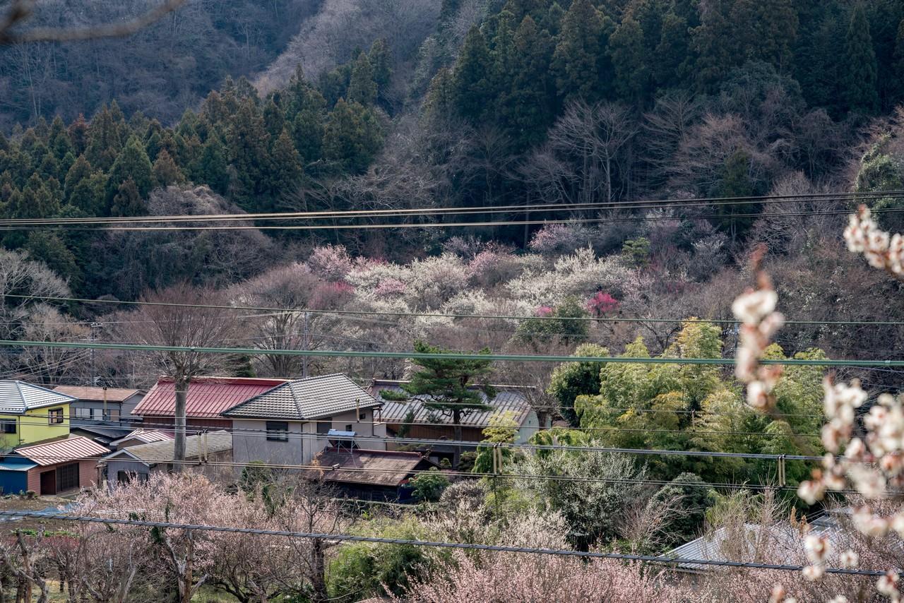 190310高尾梅郷_031