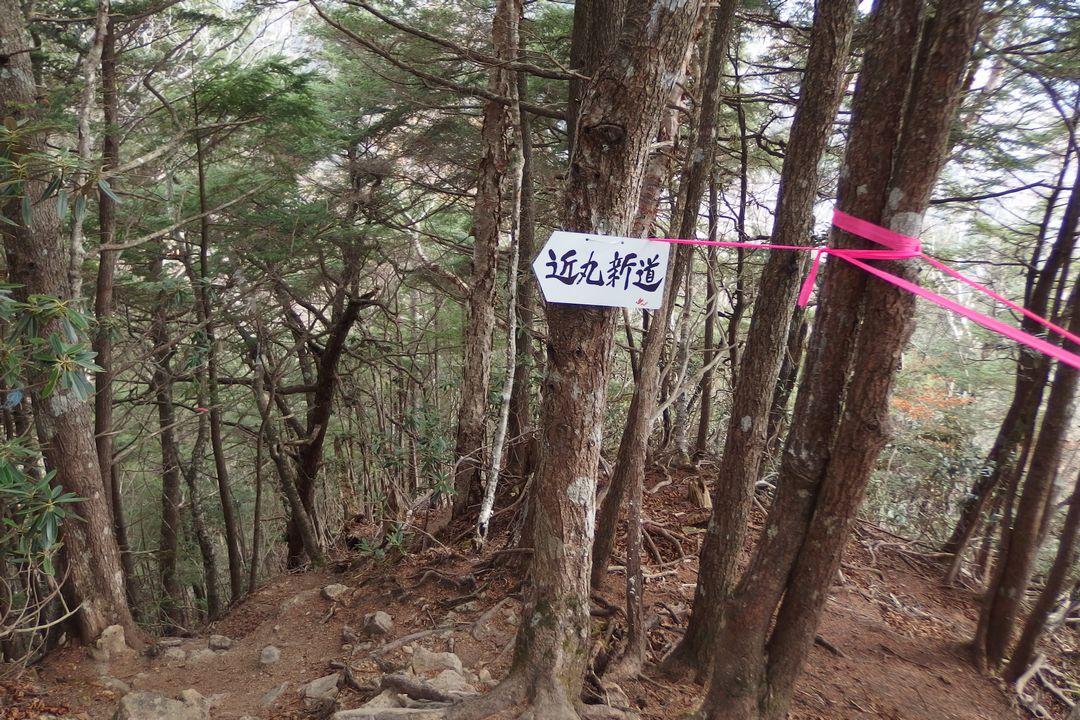 甲武信ヶ岳 近丸新道と徳ちゃん新道の合流地点