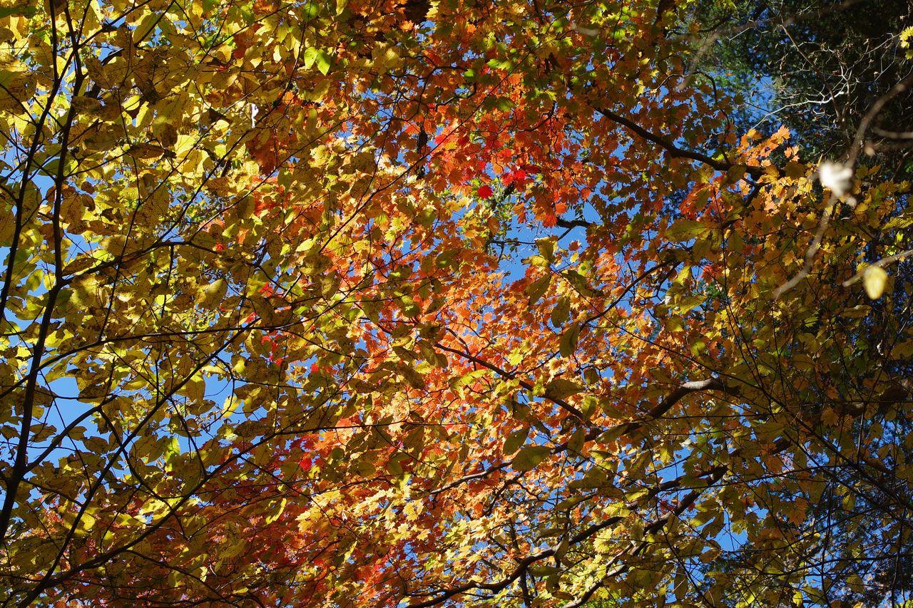 御岳山裏参道の紅葉