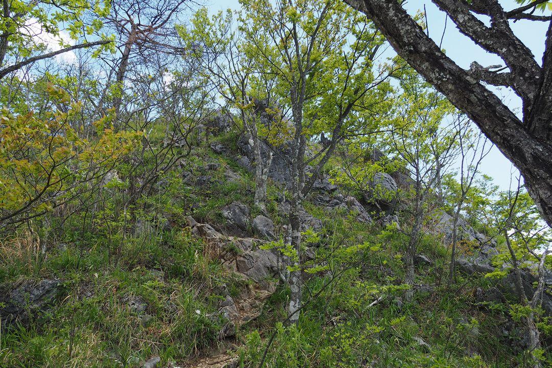 二子山 東岳の登山道