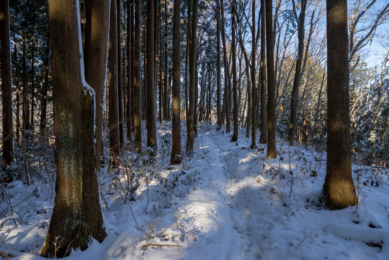 積雪した馬頭刈尾根の登山道