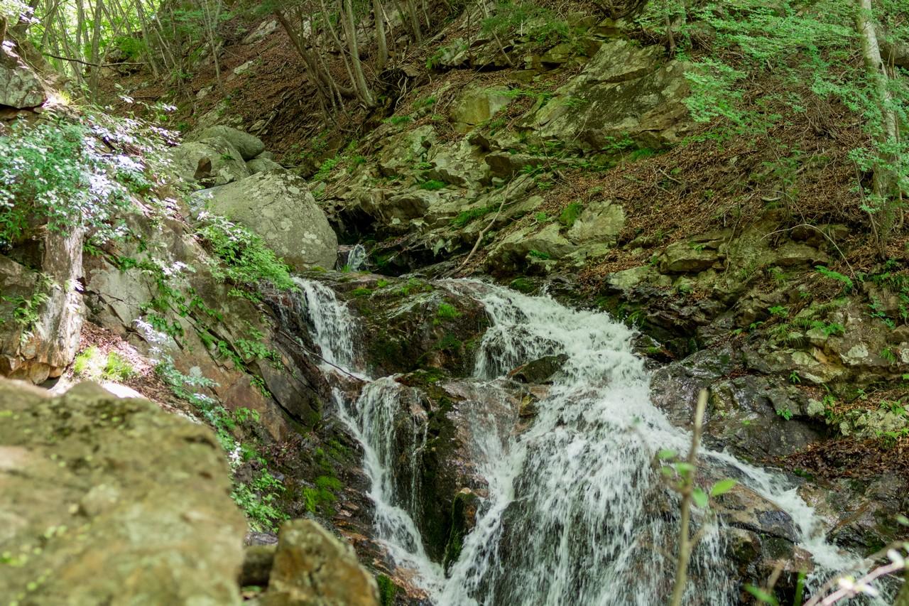 滝子山すみ沢コースの登山道